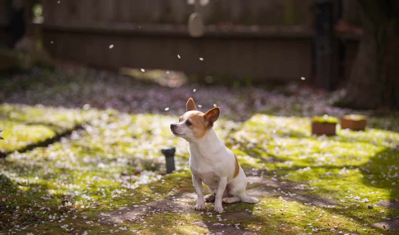 собака, весна, comments,