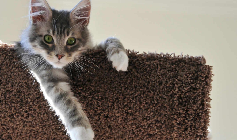 кот, серый, котенок,