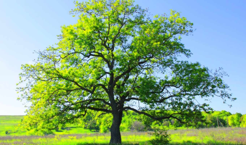 природа, самый, дерево, video, posted, uploaded, los, scenery,