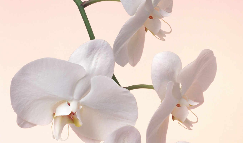 орхидеи, цветочные, композиции, размером,