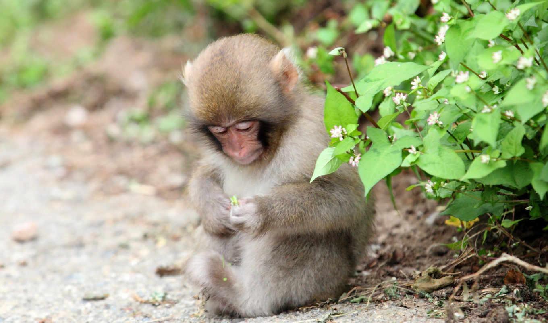 природа, обезьяна, животные,