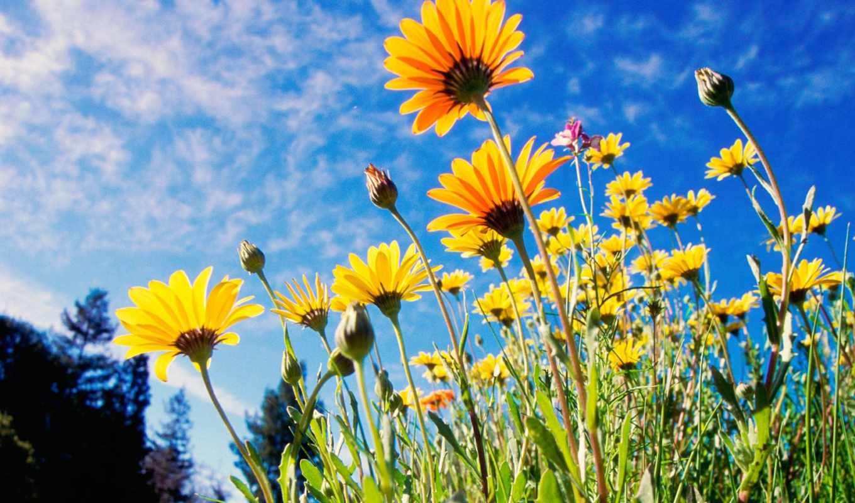 цветы, цветов, красивые,