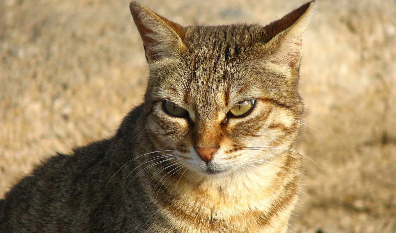 кот, злая, котенок, кошек, кошки, red, продолжительность, очень, взгляд, раскрыть,
