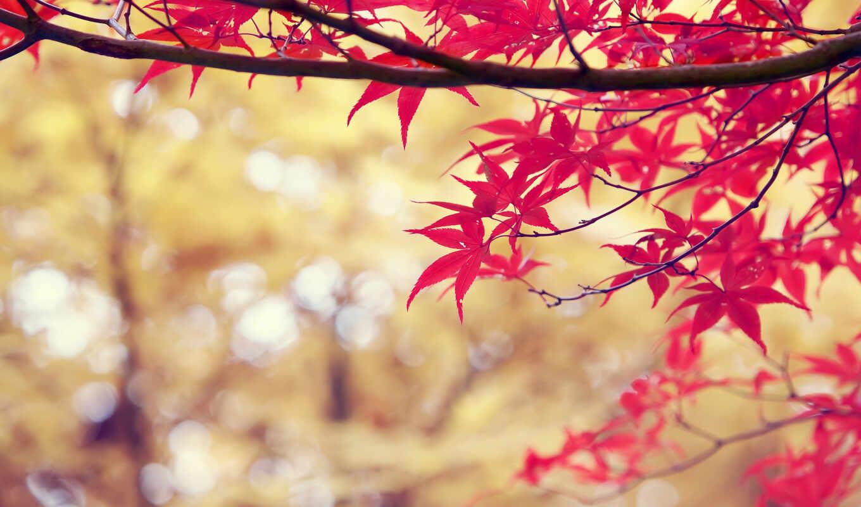 осень, лист, дерево, растение, планшетный, экран, dual, фотоаппарат, ноутбук, природа