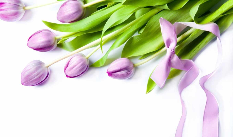 цветы, тюльпаны, тюльпан, весна, лепестки, высоком, весенние,