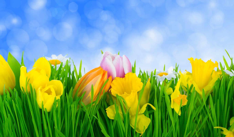 цветы, весна, тюльпаны, травка, łąka,
