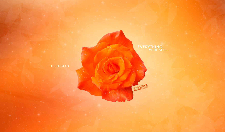 абстракция, цветы, оранжевый, роза,