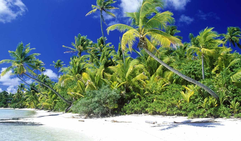 природа, красивые, бесплатные, качественные, фотографий, summer, чайка, фотообои, картинок, ocean, теме,