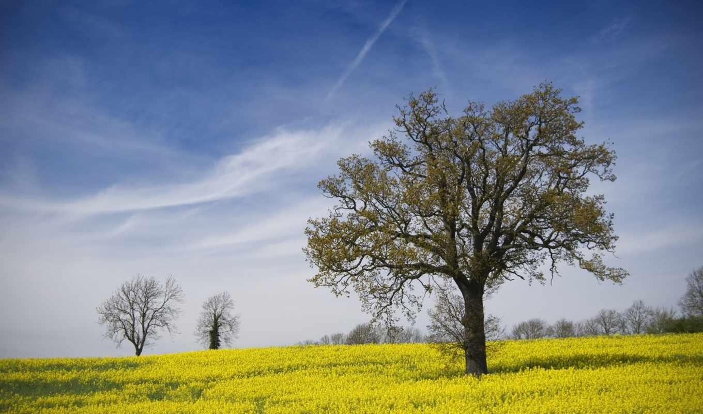природа, весенние, красивые, цветы, trees, небо, желтые, поле, oblaka,