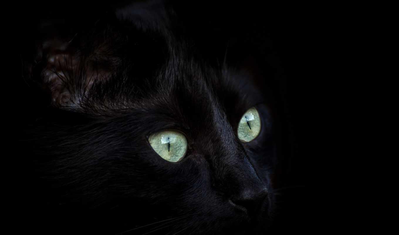 , кот, морда, глаза,