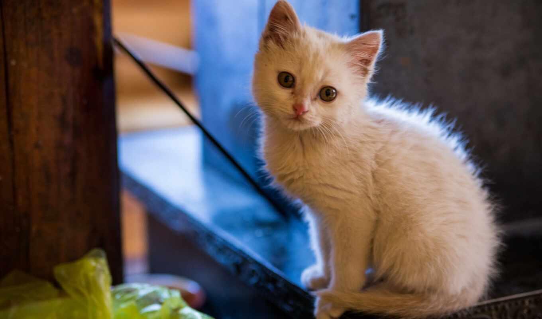 кот, kuce, котенок, imut, anak, глаз, смотреть, white, cute