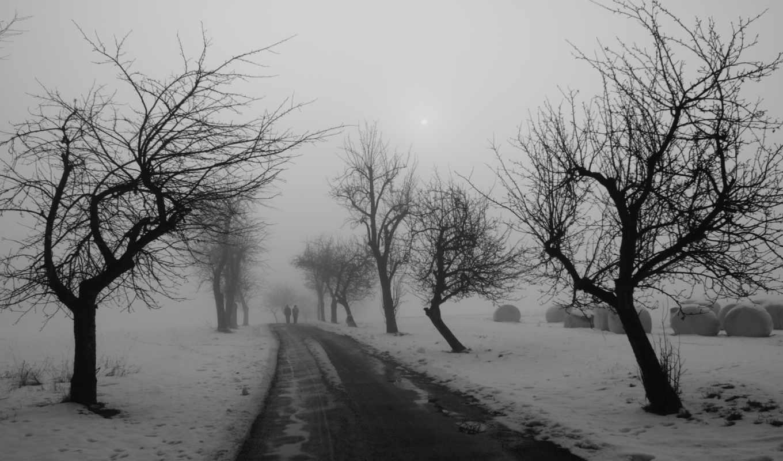 деревья, дорога, люди, зима, похожие, дороге,