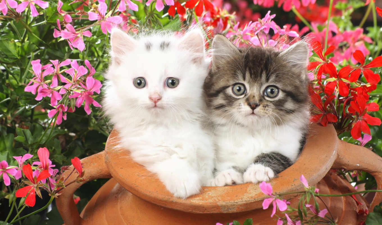 cute, cats, kittens, кот, котенок, more,