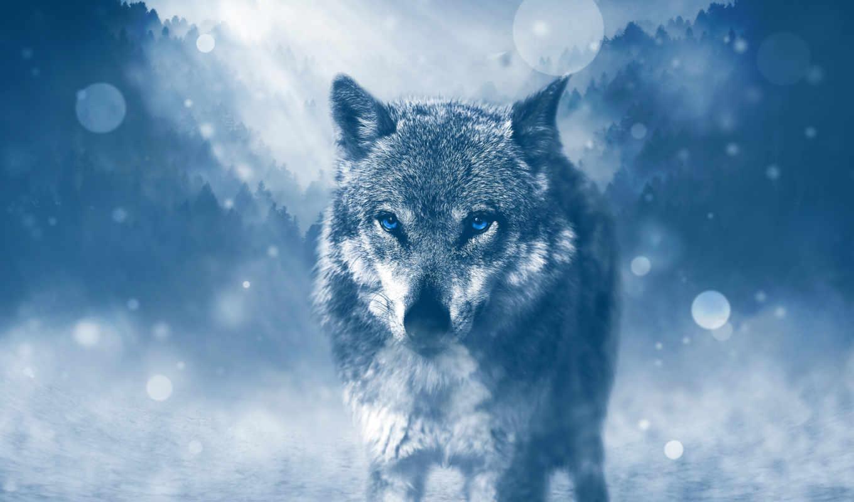 волк, desktop, ultra, zhivotnye, хищник,