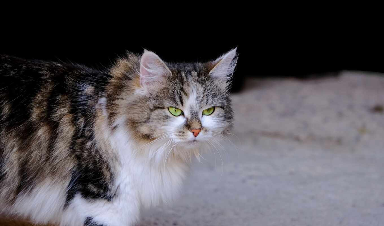 картинка, pet, кот, snapshoot, yeon, фото, окно, familiar, лицо