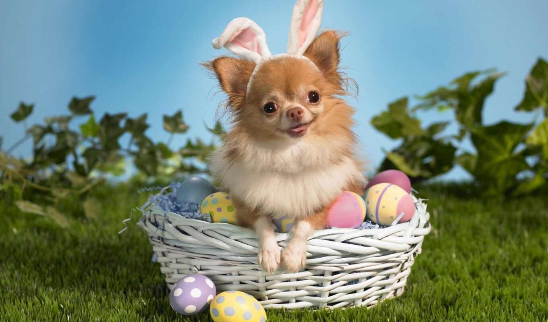 собака, пасхальный, яйцо, easter, кролик