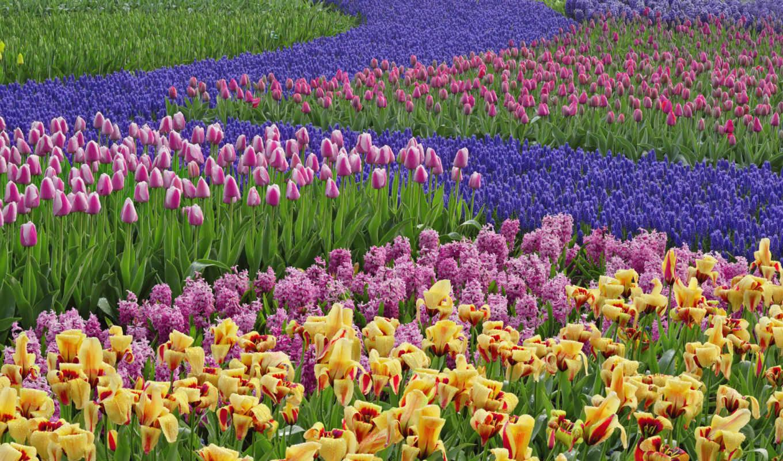 обои, обоев, цветы, фото, шт, количество, com, вес