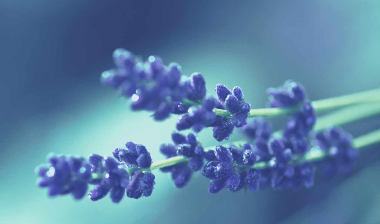 макро, цветы, природа, рисунки, картинка,