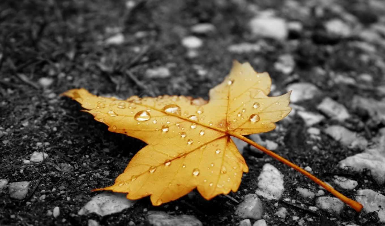 лист, асфальт, капельки, осень, дождь, желтый, leaves, nature, картинка, капли, кнопкой, правой, картинку,