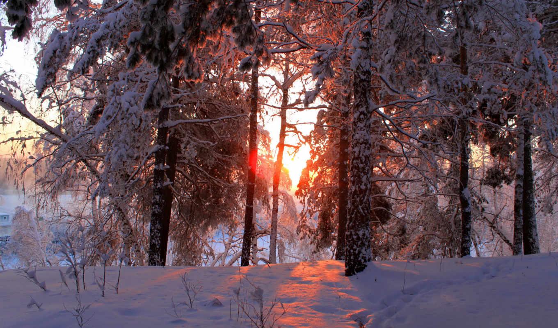 зима, природа, времена, снег, года,