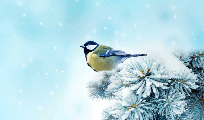 Картинки с зимой со снегирями