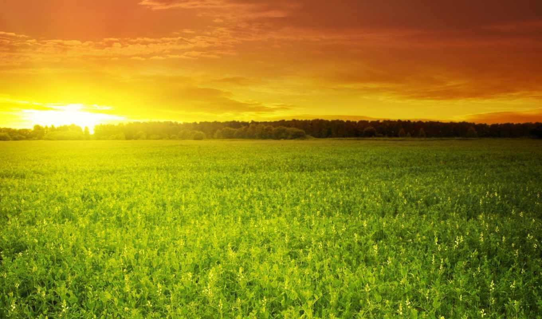 поле, high, dan, со, закат, cinta, кровь, stock, небо, ниже,