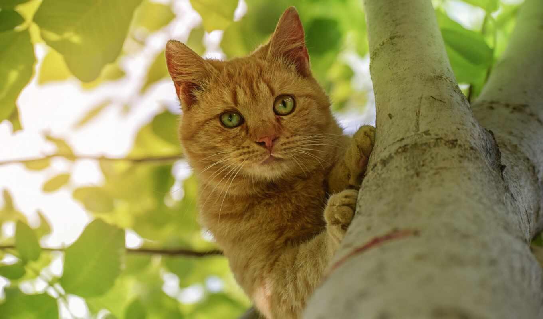 кот, kot, domestic, дерево, znyat, порода, short