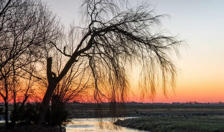 природа, закат, дерево, поле, пейзаж,
