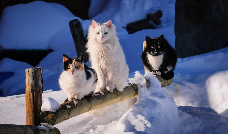где, dom, кота, такое, zima, dva, tri, кошки, теснота,