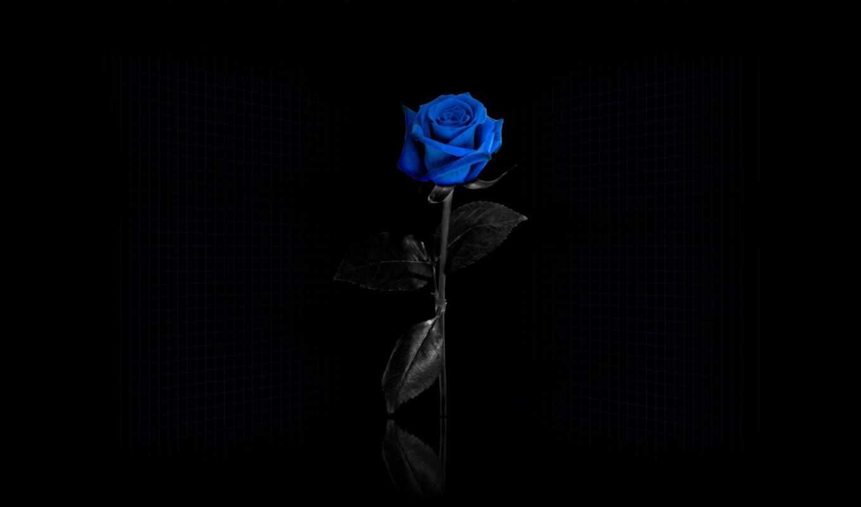 blue, роза, twitter, flowers, header, free, цветы, headers,