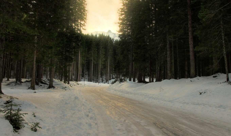лес, winter, дерево, дорогой, fore, снег, хвойный, slyakot, гора