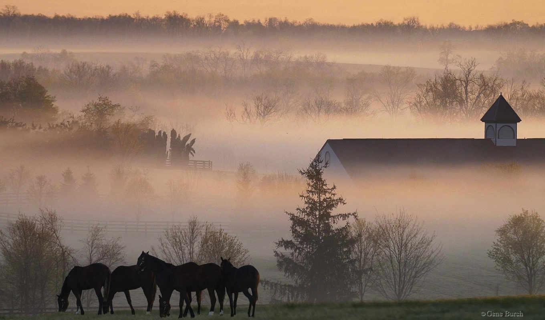 morning, horses, туман, лошади, desktop, nature, www, amazona, mist, farm,