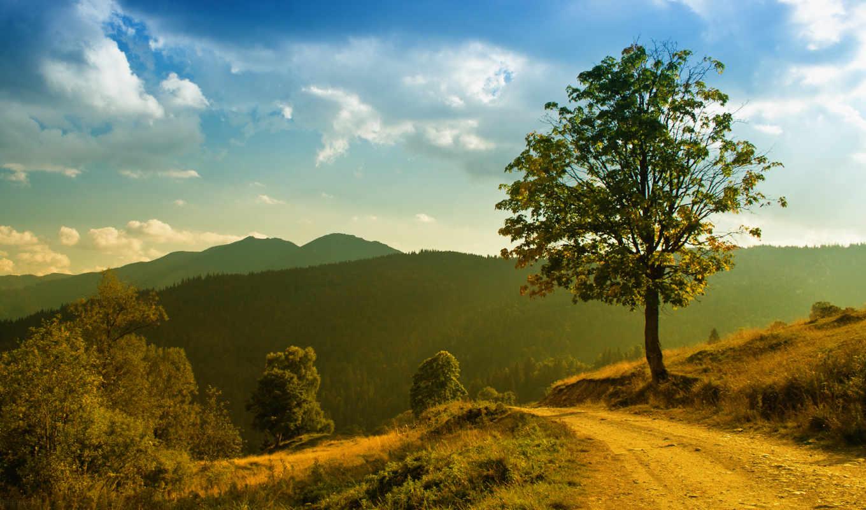дорога, горы, лес, деревья, небо, облака, трава, природа, солнце, свет, пейзаж, зелень, дерево, грунтовая, горах, тропинка, картинка,