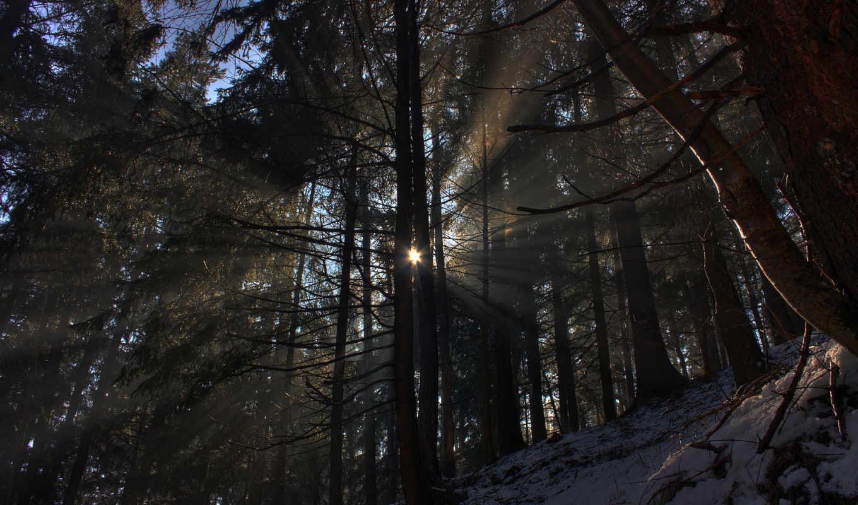 лес, природа, свет, winter, снег, лучи, sun, горы, деревя,