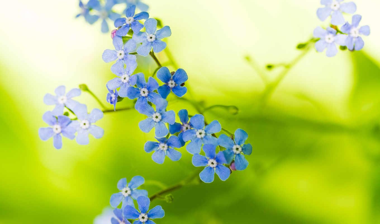 природа, цветы, flowers, banta, санта, santabanta,