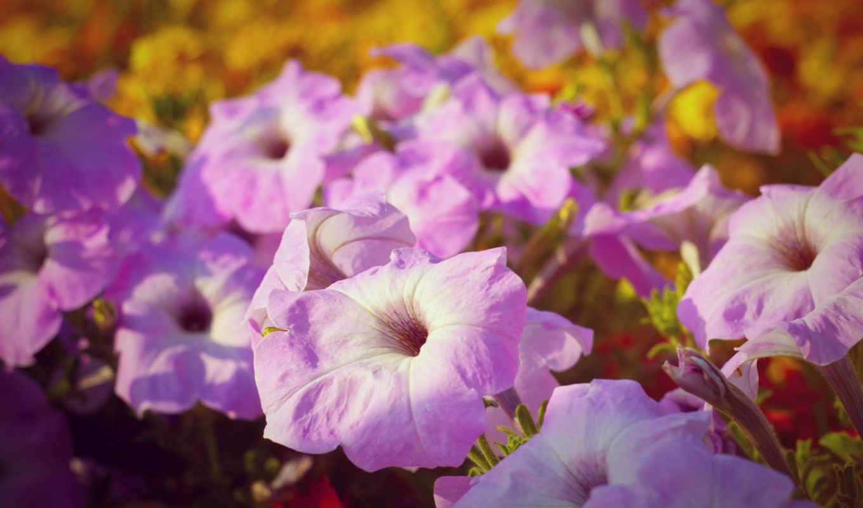 поляна, макро, природа, желтый, цветы, бутоны, фиолетовые, розовые,