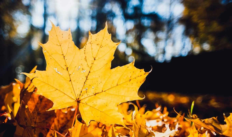 тепло, будет, осень,