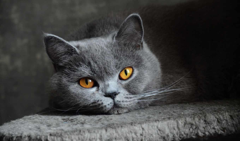 котята, заставки,
