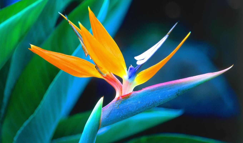 мире, красивые, самые, цветы, цветов,