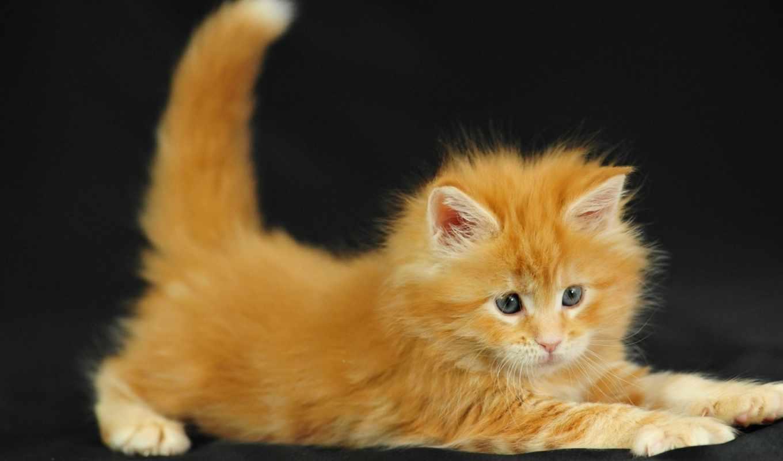 ,рыжее, солнышко, истории, смешные, коты, счастье,, спокойной,