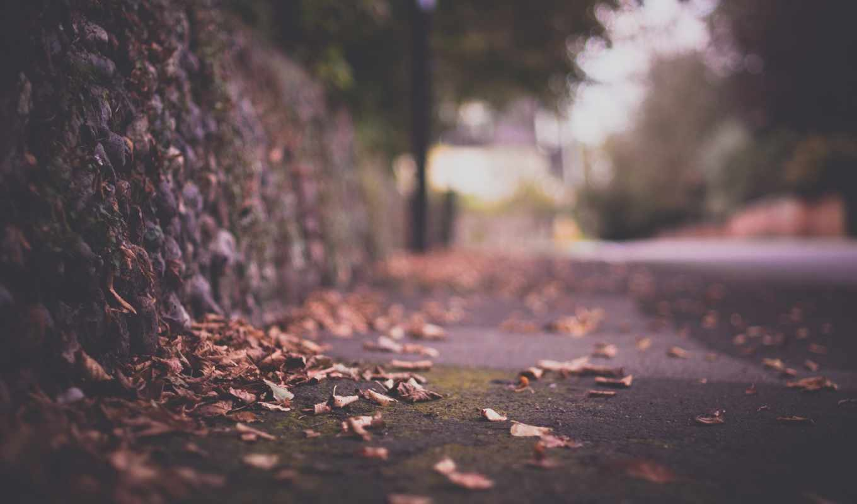 осень, город, ограда, дорога, листва, макро, блики, картинка,