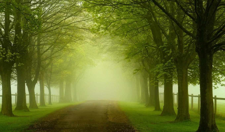 зелёный, лес, природа, landscape, trees, листья, тропинка, roads,