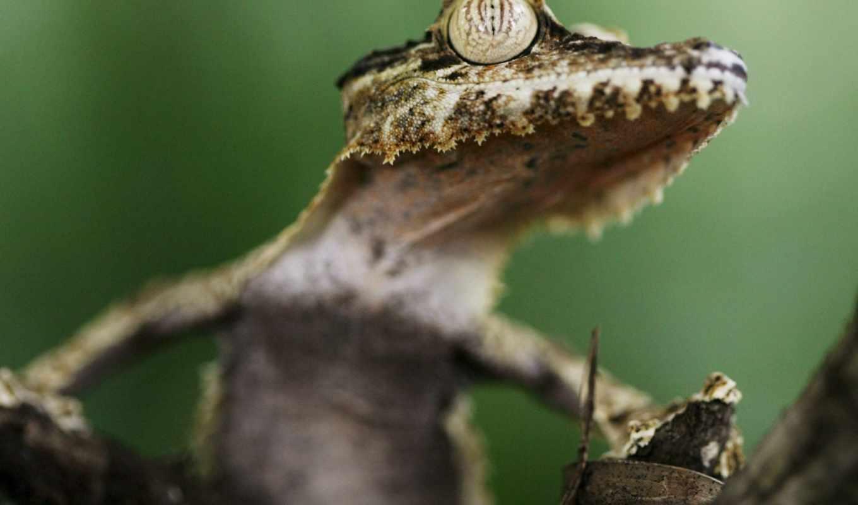animales, reptiles, por, exóticos, exoticos, extraordinario, los,
