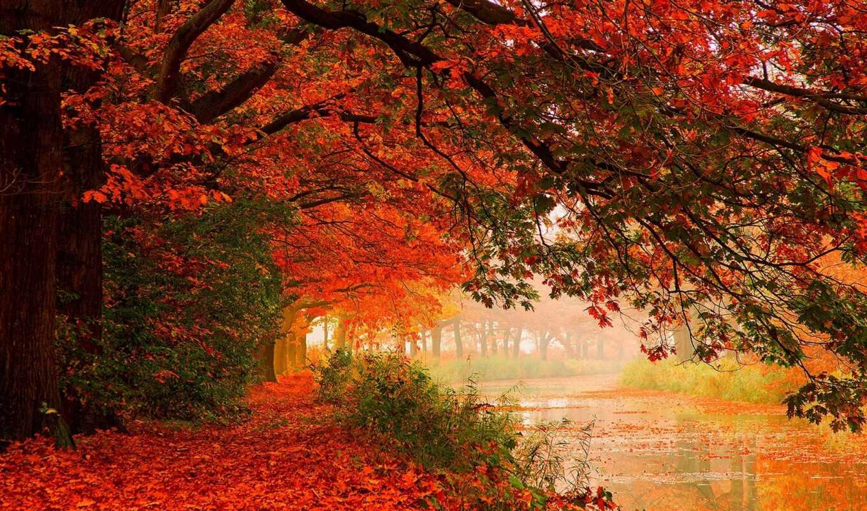 природа, hdr, красивые, листья, осень, фоны, флот, клипарт, лес, деревья, природы,