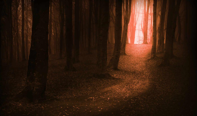 лес, дерево, магия, pictures, videos, фотообои, this, has, following,