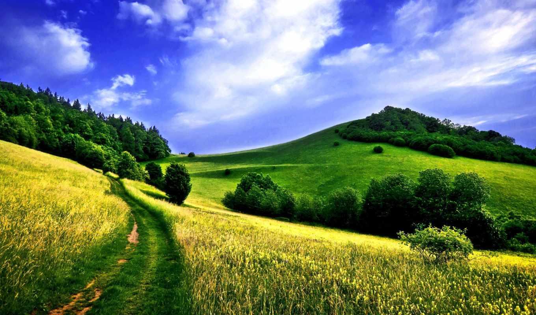 поле, дорога, лес, зелёный, луг, hill, склон, trail,