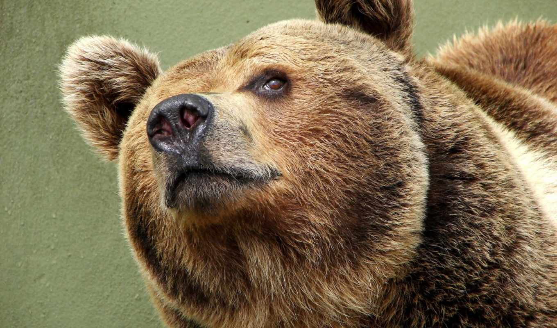 bears, медведь, чиж, pinterest, meme, бесплатные,