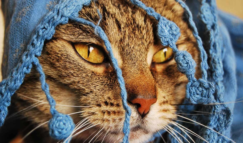 животные, красивые, обои, фото, самые, обоев, коти