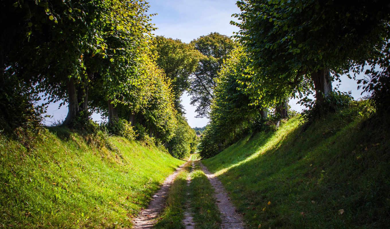 дорога, трава, природа, деревья, небо, лето,
