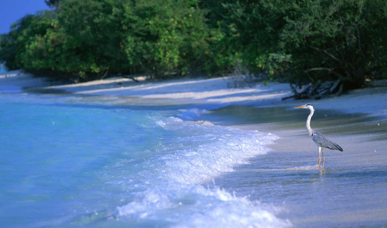 мужской, maldives, мальдивах, мальдив,